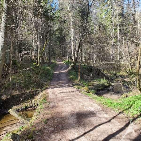 Kulautuvos miškais (12 km)