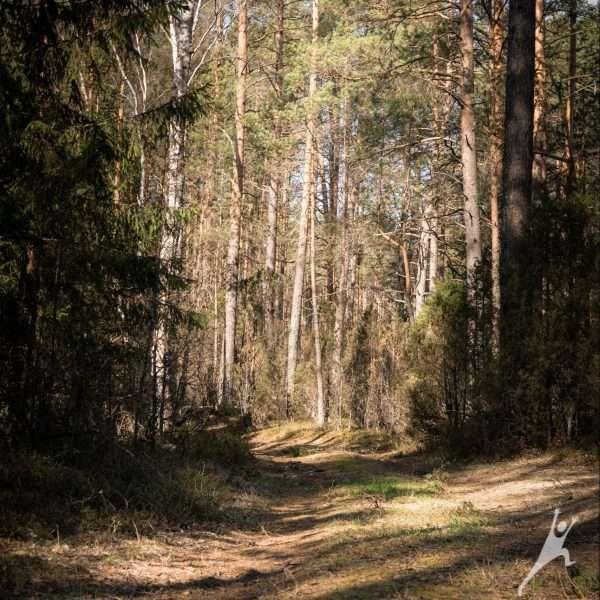 Labanoro girios takais (34 km)