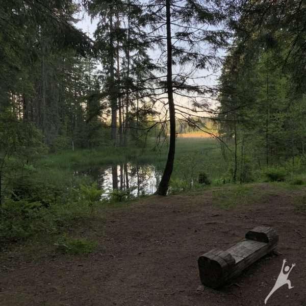 Miško takais nuo Juodlės (12km)