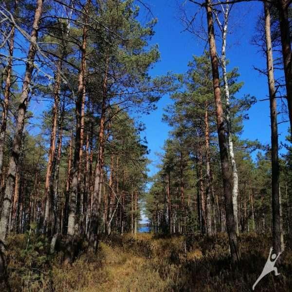 Iššūkis Alionių pelkėje (5 km)
