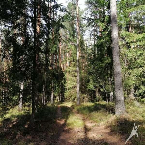 """""""Dzūkiškais"""" miškais link Bartkuškio kopos (15 km)"""