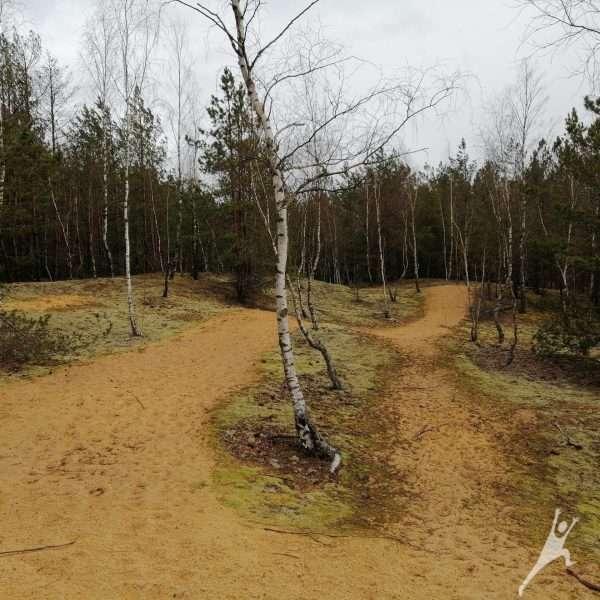 Gerviraisčio pelkės takais (8 km)