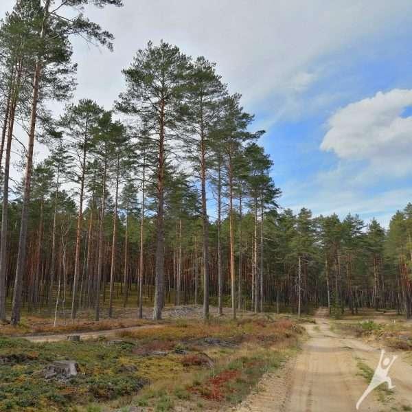 Miško keliukais tarp dviejų draustinių (13km)