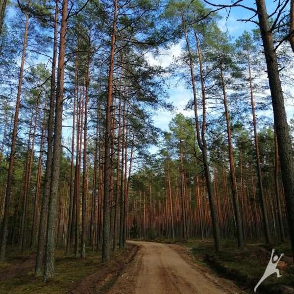 Žygimantiškių miško takais (15 km)