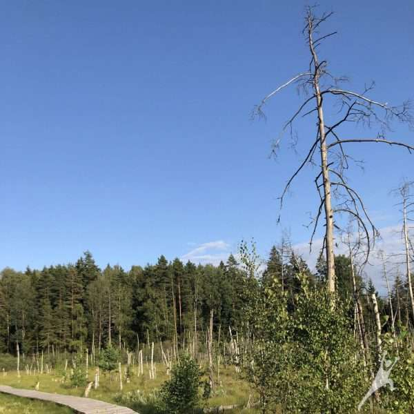 Dubravos miškais (9 km)