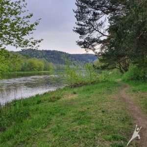 Bukčių miško ir Neries pakrančių takais (12 km)