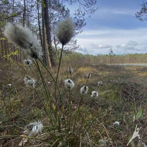 Šimonių girioje link išnykusio kaimo ir aukštapelkės (11 km)