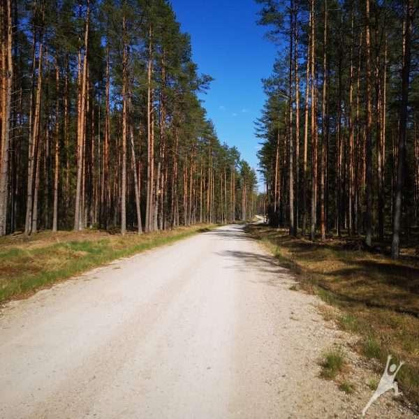"""Braziūkų pušynų takais link liepos """"Motinėlės"""" ( 17 km)"""
