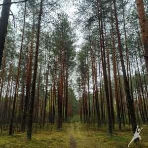 Kairėnų miško gėrybių žygis (6 km)