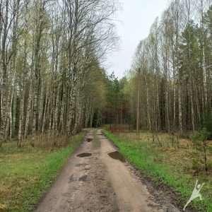 Nemenčinės miško pievomis nuo Šeškučių (10 km)