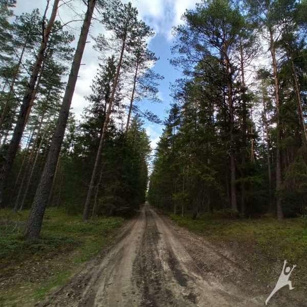 Miško takais prie Mickūnų (6 km)