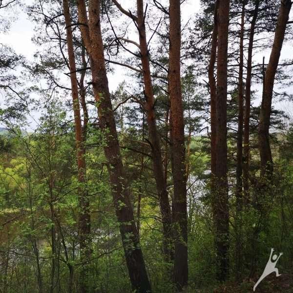 Iš Gudelių Sudervėlės ir Neries krantais (8 km)