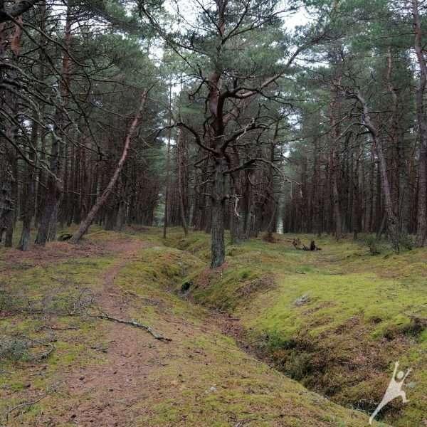 Kuršių nerijos laukinė magija (20 km)