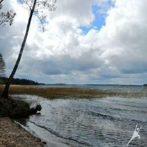 Miškais Platelių ežero pašonėje (14 km)