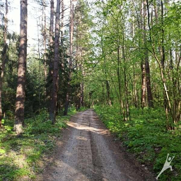 Panerių erozinio kalvyno takais (6 km)
