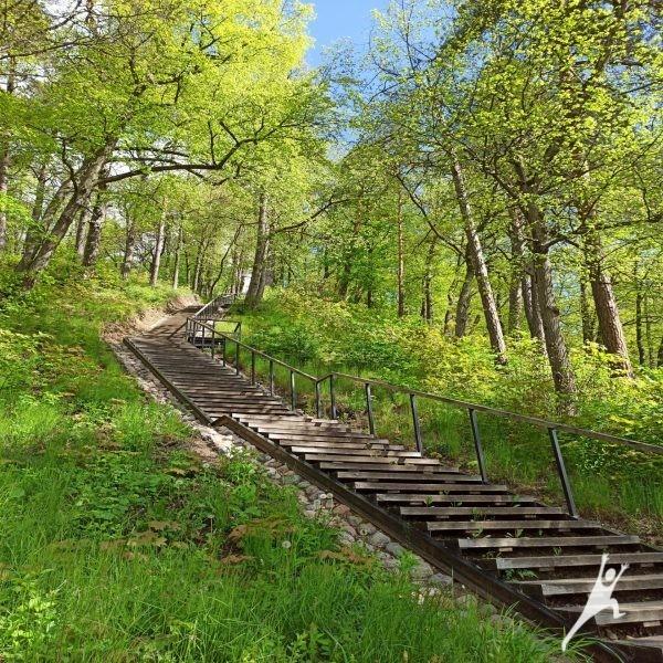 Verkių regioninio parko šlaitais (9 km)