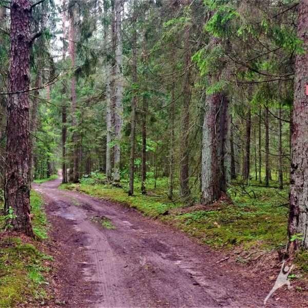 Dubysos vingių slėniais (18 km)