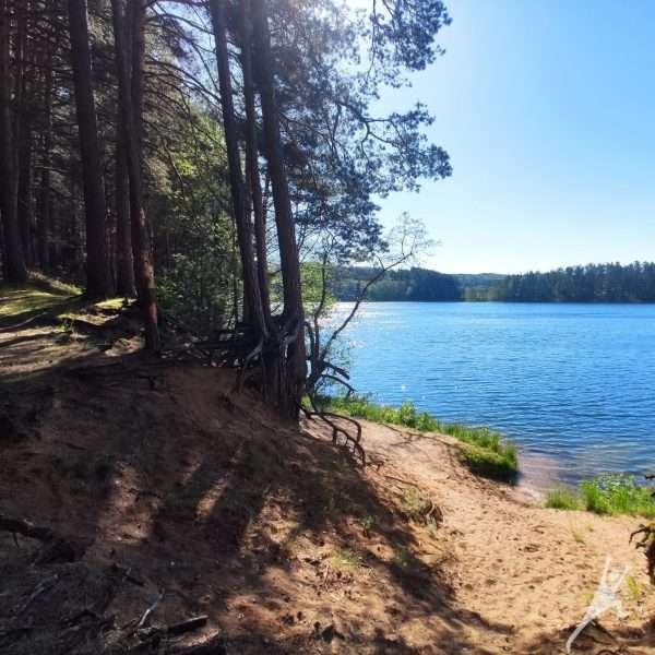 Palei paslaptingą Ilgio ežerą link Vidiškių (14 km)