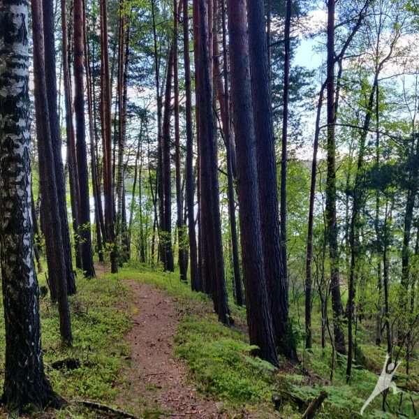 Aukštaitijos nacionalinio parko širdyje – ežerų takais (23 km)
