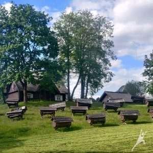 Stripeikiai – senovės bitininkystės takais (13 km)