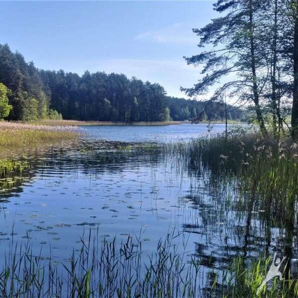 Ignalinos vietinių gyventojų takais (5 km)