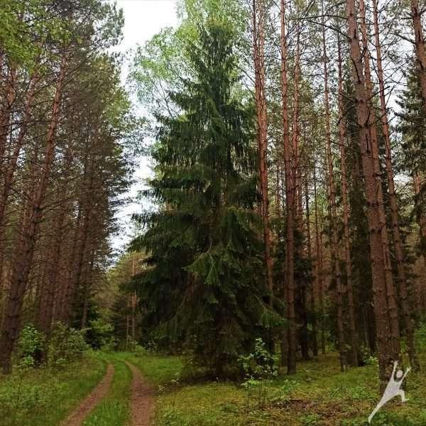 Bezdonių miškuose link rekordinio užrašo Žalgirio mūšiui (12 km)