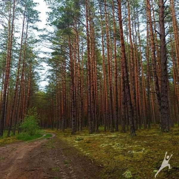 Atokiais Bezdonių apylinkių takais (17 km)