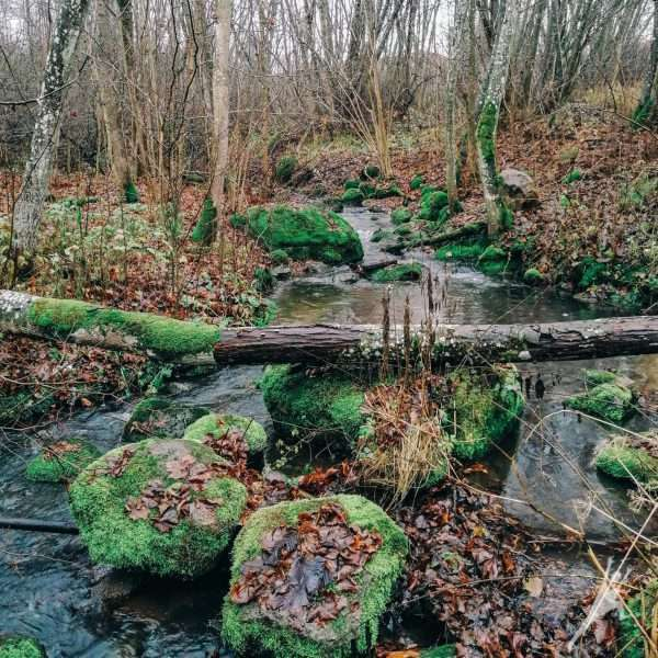 Neries regioninis parkas: už pažintinio tako ribų (17 km)