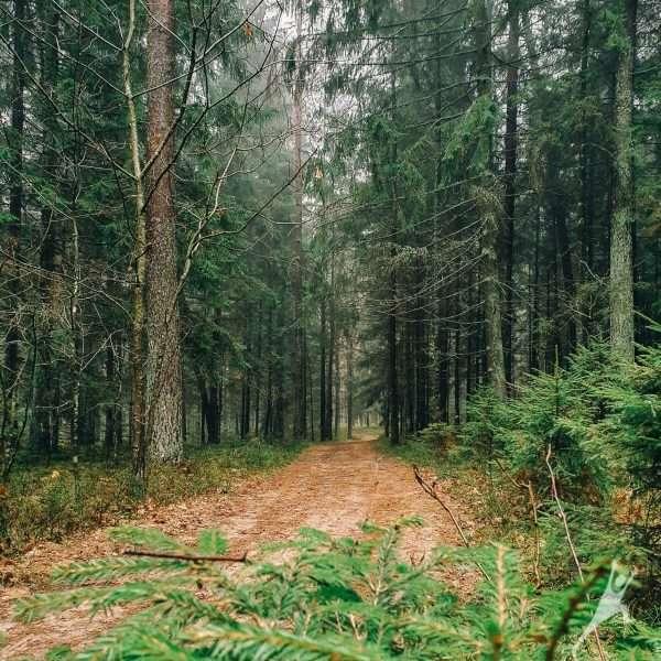 Šikšnosparnio formos maršrutas Aukštagiryje (11 km)