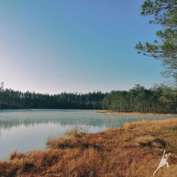 Labanore Aibutiškio pelkės prieigose (12 km)