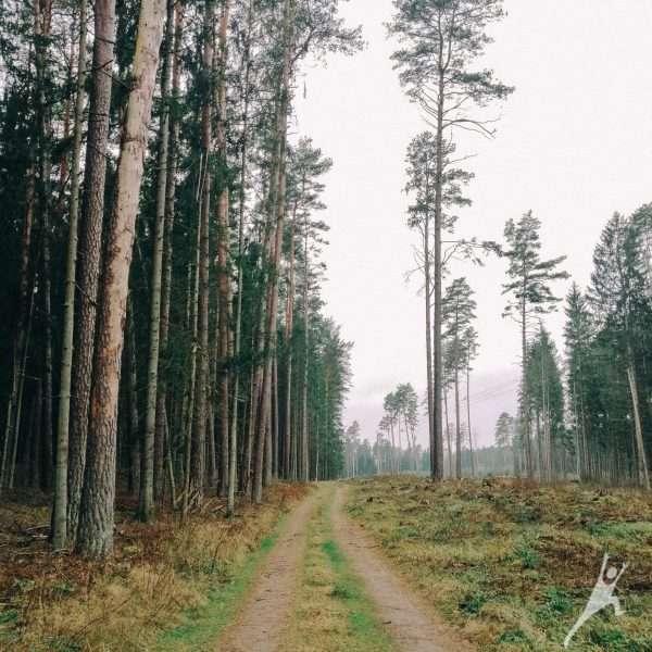 Palei Nemuną nuo Škėvonių atodangos (14 km)