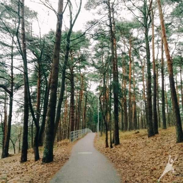 Vičiūnuose: Panemunės šilo takais (7 km)