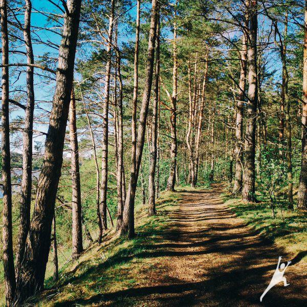 Pilėnų miškais link Smerties kalno (11 km)
