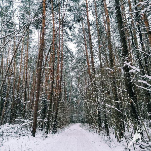 Miškais link Čiobiškio keltuko (20 km)