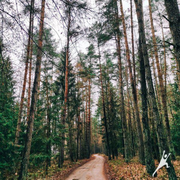 Miško takais palei Nerį (7 km)
