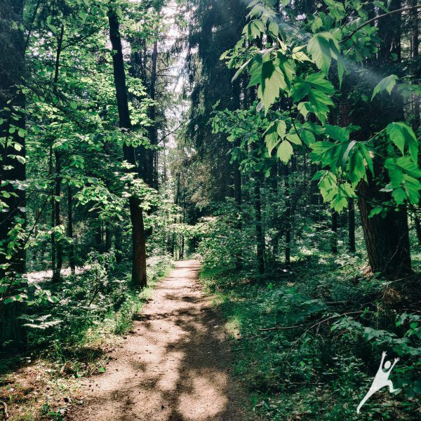 Širdelės formos žygis Sapieginės miške (5 km)