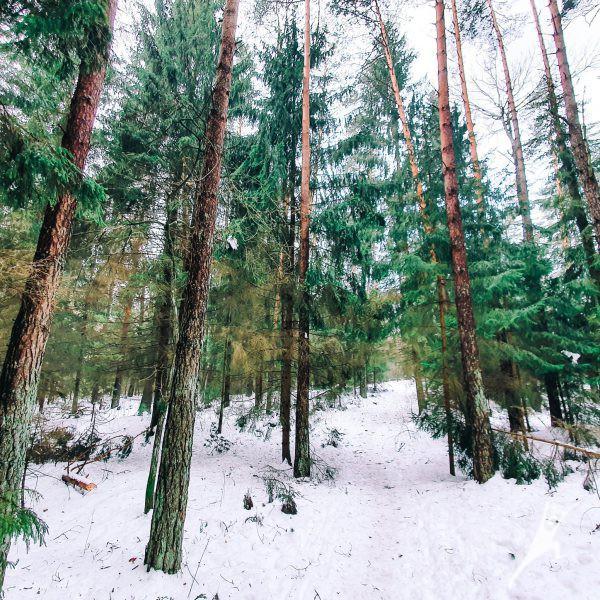 Tapelių kraštovaizdžio draustinio takais (8 km)