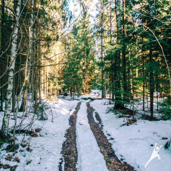 Per sodybas Gitėnų miško takais (27 km)
