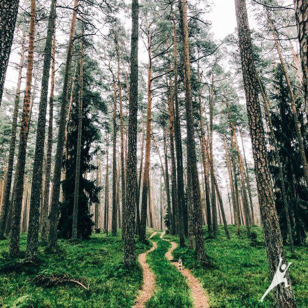 Žvėrių pramintais takais po Kintų mišką (10 km)
