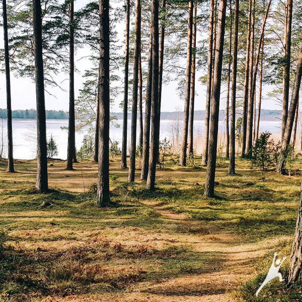 Paežeriais per etnografinius kaimus (23 km)