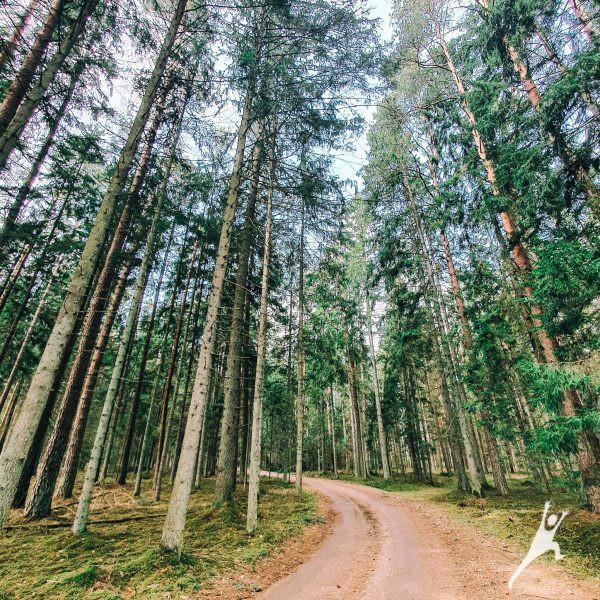 Trumpesniu keliu į laisvę (12 km)