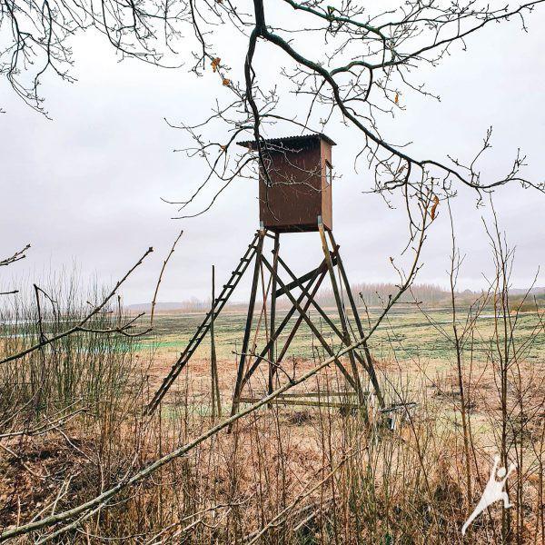 Stebint paukščius Žiemkelio pievose ir miške (7 km)