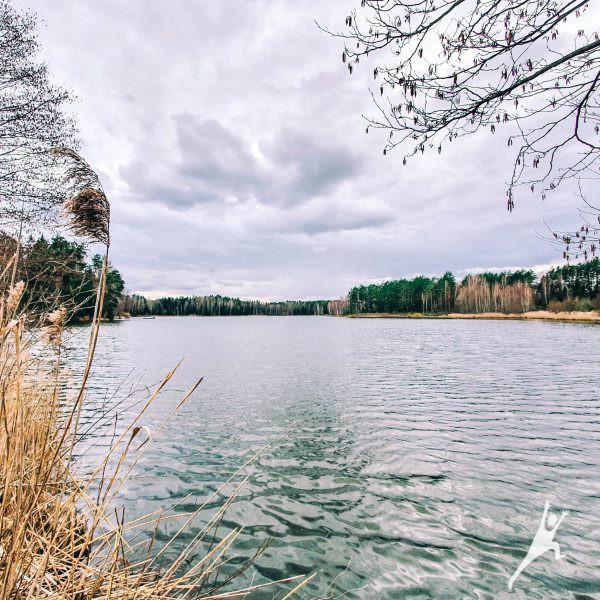 Bedugnės miško trumpoji istorija (13 km)