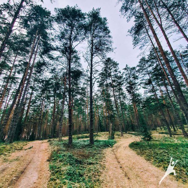 Bedugnės miško ilgoji istorija (23 km)