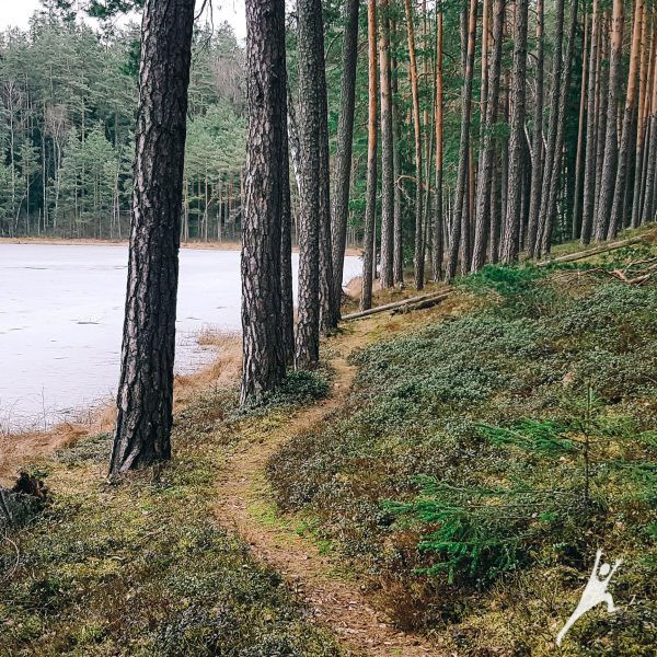 Minčios lobių beieškant (23 km)