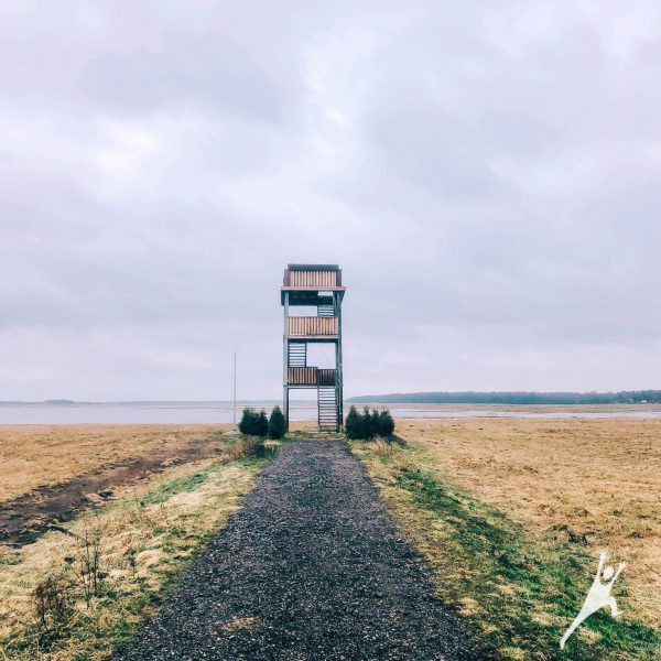 Stebint paukščius Nemuno deltoje (19 km)