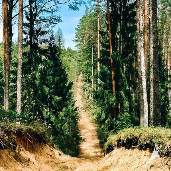 Kazlų Rūdos miškų jūra (13 km)