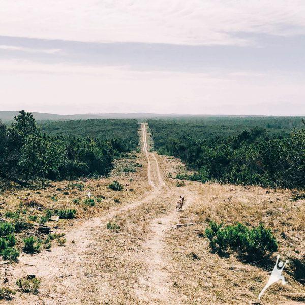 Pervalkos kopomis lyg lietuviškoje dykumoje (11 km)
