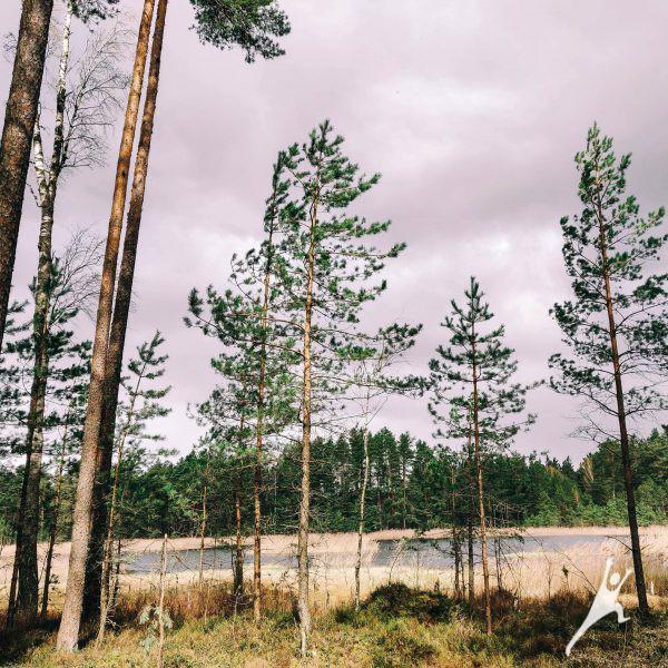Begėdžių miško iššūkiai (17 km)