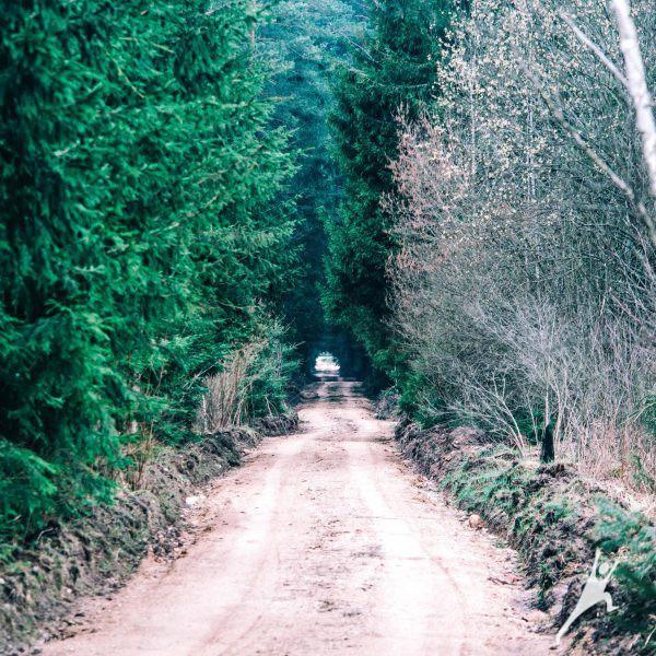 Šalis šalies viduje – Šalčininkai (16 km)